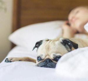 Stop Snoring Abuse
